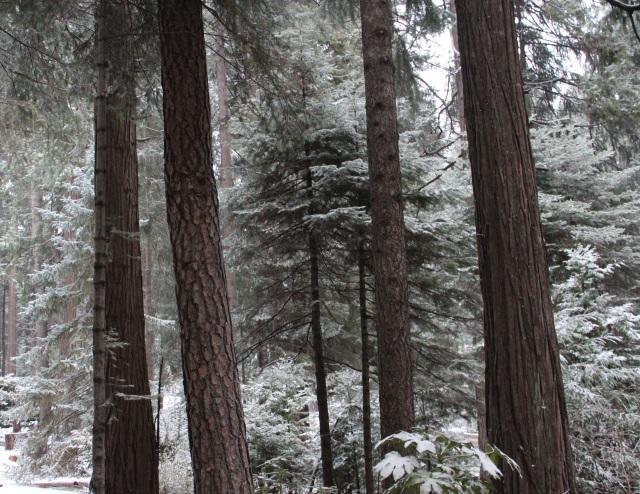 snowy yard 5