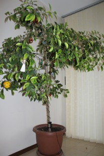 2012 - Addis Ababa, Ethiopia. The houseplant from the 2nd floor foyer.