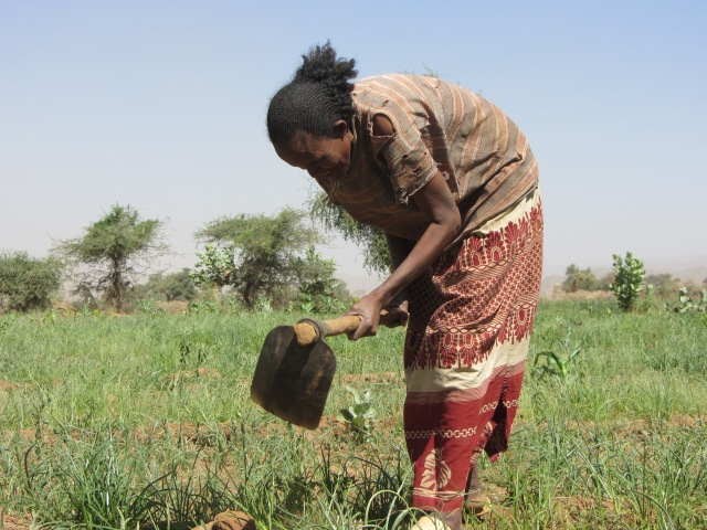 http://www.usaid.gov/results-data/success-stories/empowering-women-through-agricultural-development-ethiopia