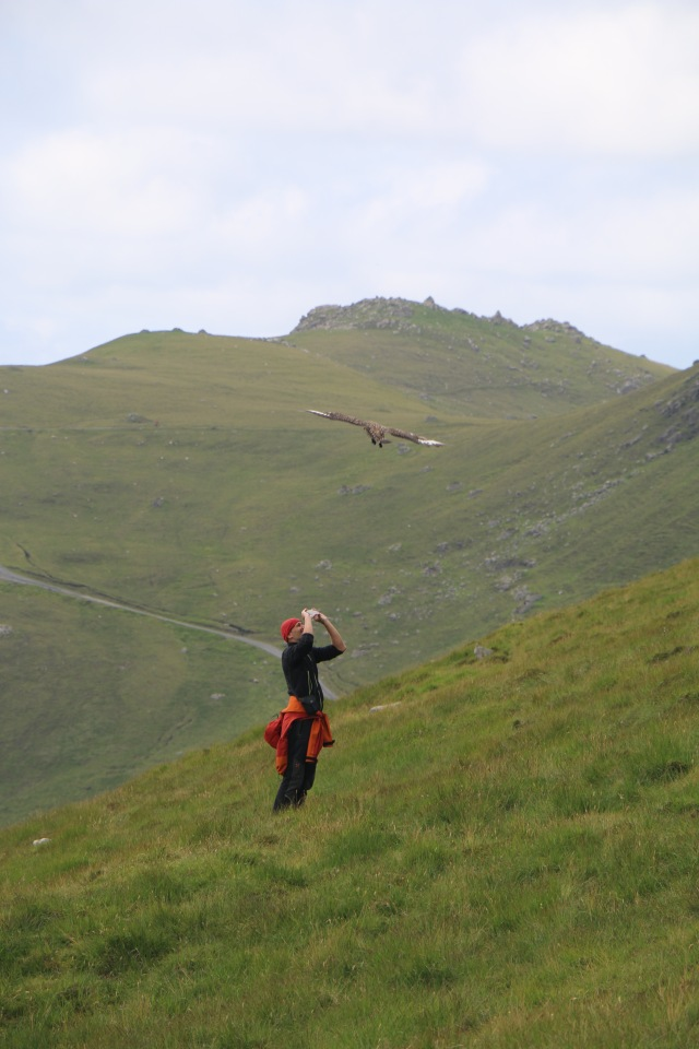 A skua repeatedly dive-bombed this hiker to try to chase him away